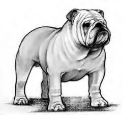 Official Bulldog Standards