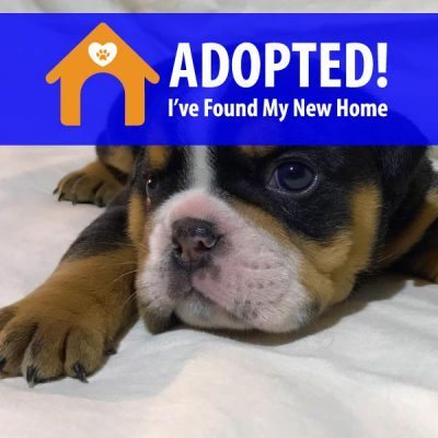 Nemo Adopted